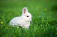 可爱的小白兔图片(9张)