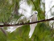 白玄鸥图片(9张)