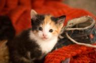 可爱的小猫咪图片(11张)
