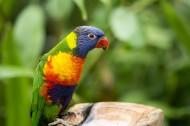 羽毛艳丽的鹦鹉图片(14张)
