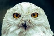呆萌的猫头鹰图片(11张)