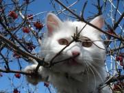 可爱白色猫咪图片(15张)