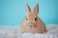软萌可爱的兔子图片(15张)