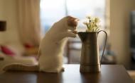 唯美浇花水壶与猫的图片(9张)