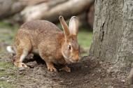 兔子图片(14张)