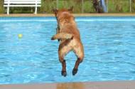 快乐玩耍的玛利诺犬图片(16张)