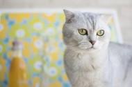 向远处张望的猫图片(10张)