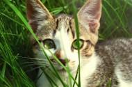 草丛里的猫咪图片(10张)