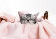 古灵精怪猫咪特写图片(45张)