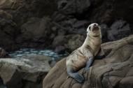 可爱的海狮图片(11张)