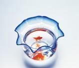 金鱼图片(20张)