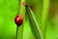 甲虫图片(22张)