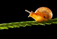 奋力爬行的蜗牛图片(8张)