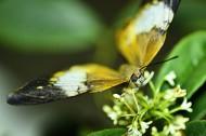 微距蝴蝶图片(8张)