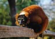 猴子图片(12张)