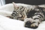 可爱的宠物猫图片(12张)