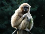 活泼机灵的猴子图片(11张)