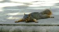 松鼠图片(12张)