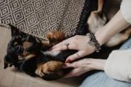 黑色的小狗图片(12张)
