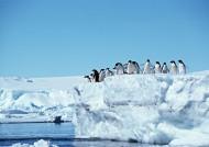 高清企鹅群居生活图片(29张)