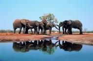 大象嬉水图片(10张)