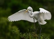 白鹭图片(7张)