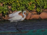 白鹭图片(9张)