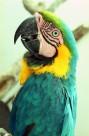 美丽鹦鹉图片(7张)