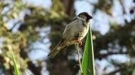 一只娇小的麻雀图片 (16张)
