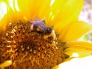 蜂花之恋图片(30张)