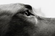 狗的局部特写图片(37张)