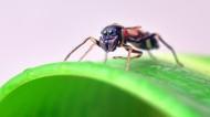 形态怪异的蚁蛛图片(5张)