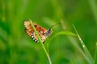 美丽漂亮的蝴蝶图片(11张)