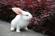萌萌的小白兔图片(7张)
