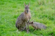 野兔图片(10张)