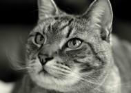 猫咪头部特写图片(10张)