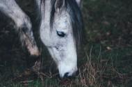 一匹正在草地上吃草的马图片(10张)