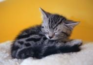 小猫睡姿图片(10张)