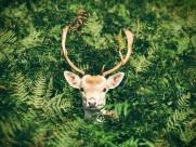 各种种类的鹿图片(16张)
