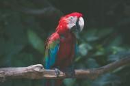 漂亮的五彩金刚鹦鹉图片(9张)