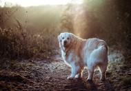 可爱宠物狗的图片(10张)