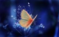 蝴蝶飞舞图片(10张)