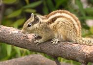 可爱的松鼠图片(14张)