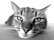 猫咪图片(19张)