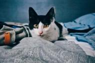 可爱的宠物猫的图片(12张)