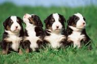 滑稽狗狗图片(28张)