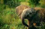 可爱小象图片(15张)