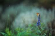蝴蝶图片(12张)