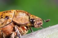 甲虫微距图片(15张)