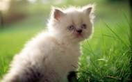 可爱的猫图片(11张)